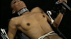 All tied up, a gorgeous ebony babe has a black dominatrix playing with her body